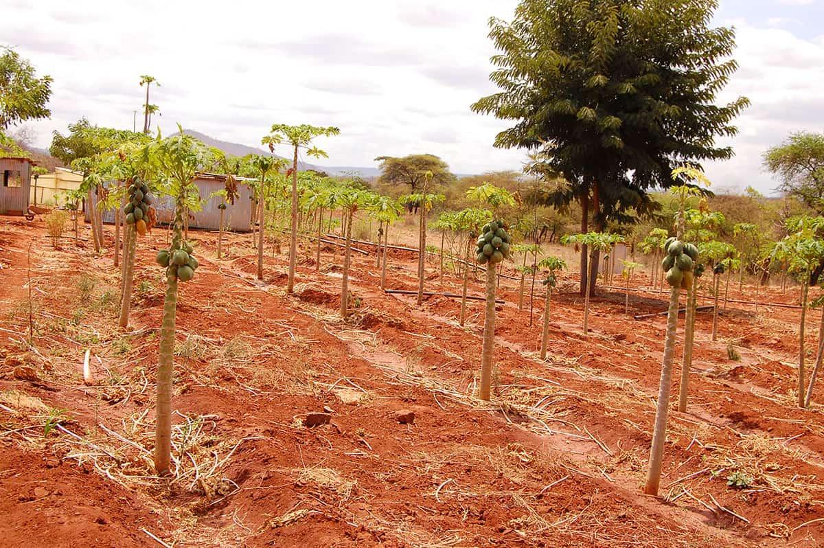 Income generating activities crops