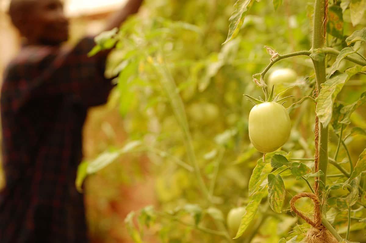 Income generating activities vine