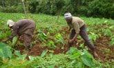 harvesting-field