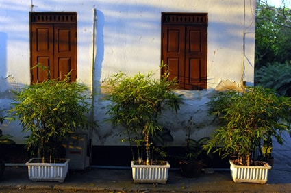 trees planted in containers outside of a building