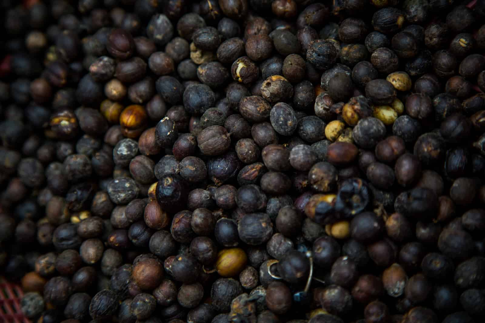 A close-up of Ethiopian roasted coffee beans