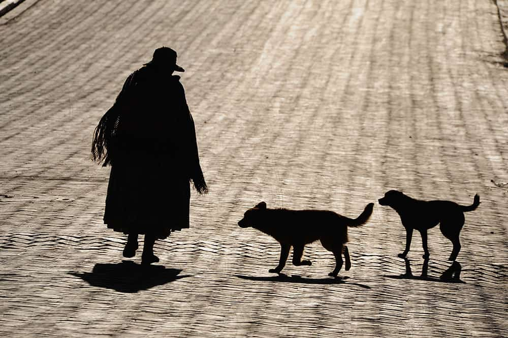 Pictures of Dogs Bolivia Woman