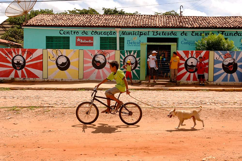 Pictures of Dogs Brazil Bike