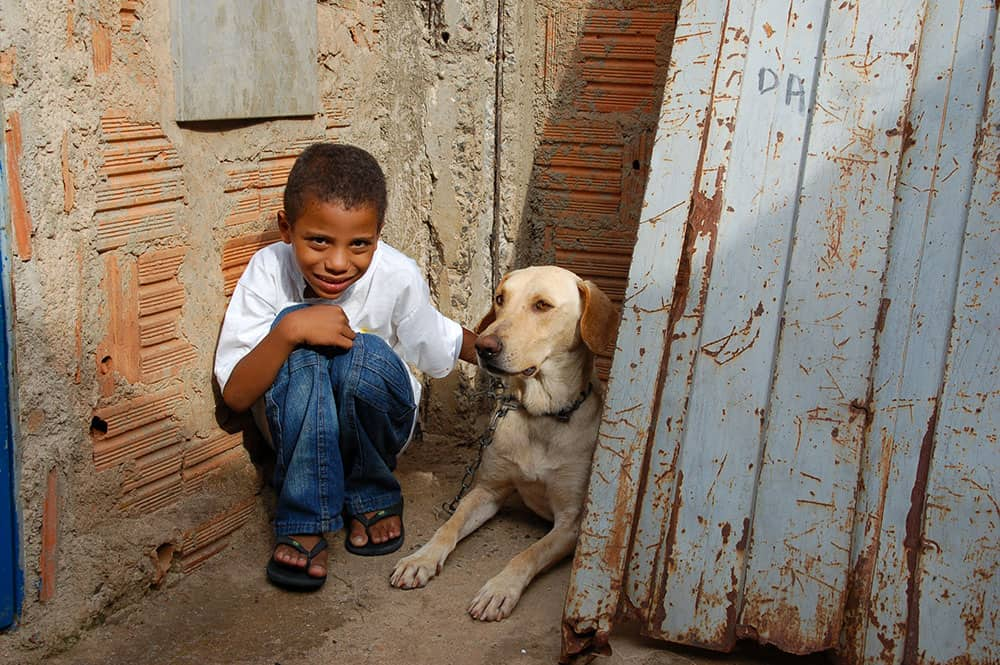 Pictures of Dogs Brazil Boy