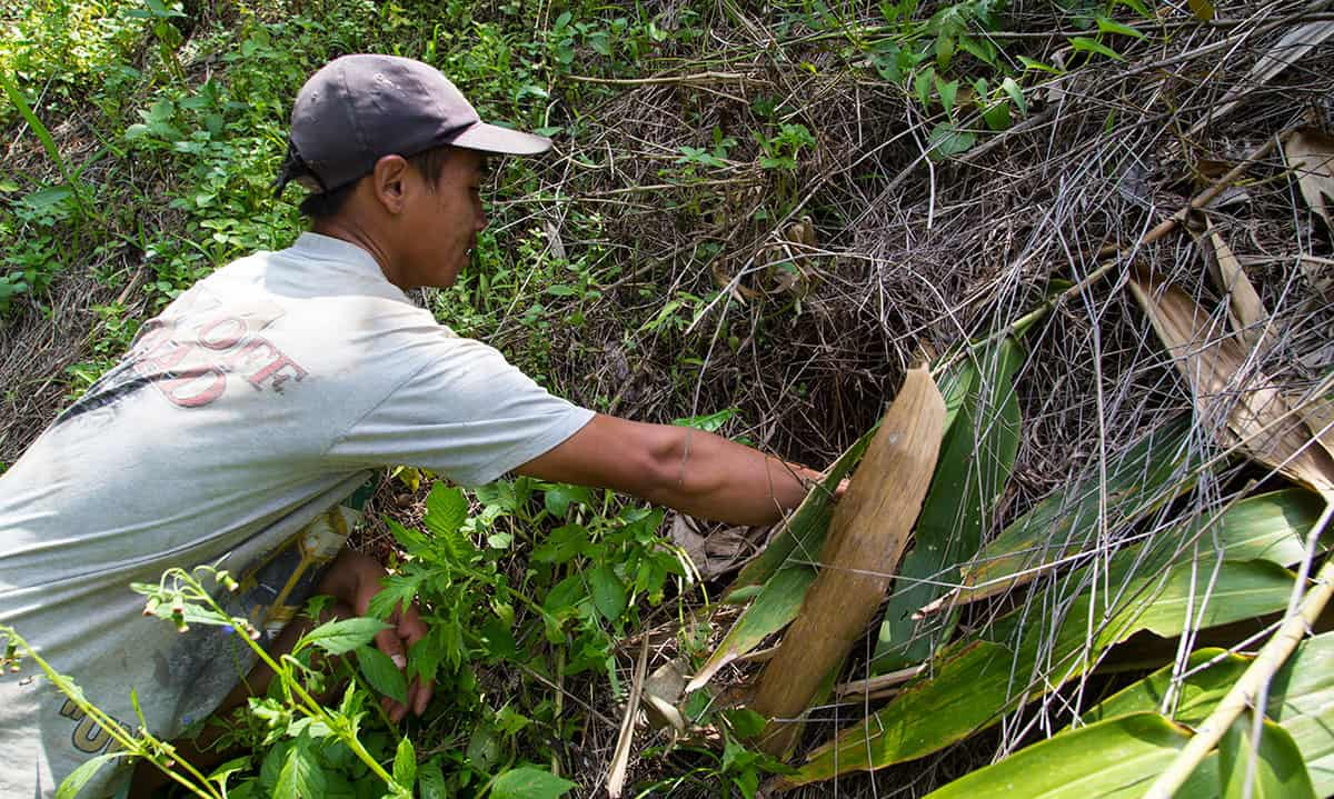 Peisa clears the brush to make sure his tea plants are still growing. His wife is pregnant and enrolled in Compassion's child survival program (CSP). These tea plants will provide a much needed income for him to support his new child.