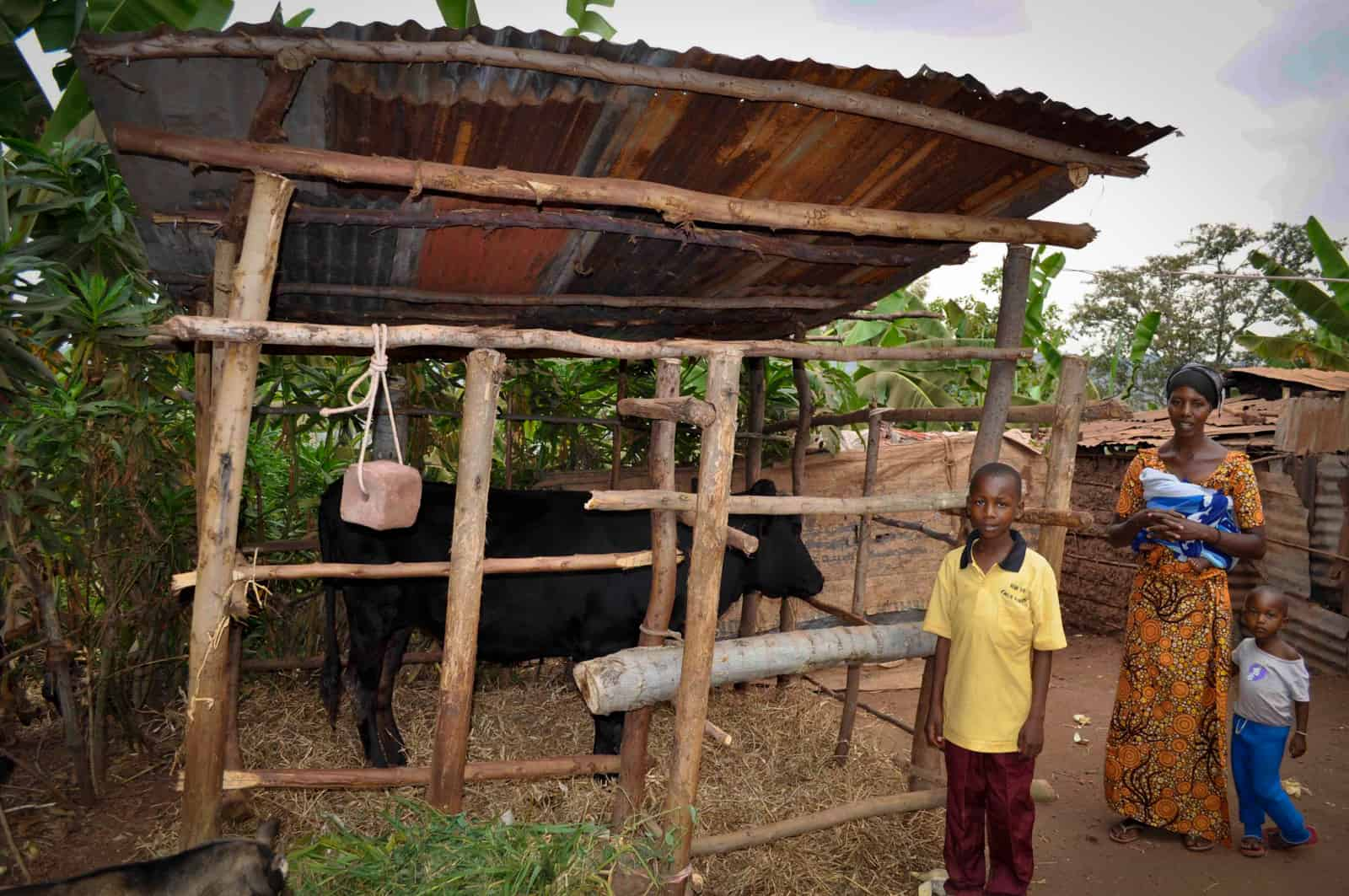 This Is What Happens When You Give Livestock to Families in Poverty